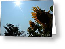 Bowing To The Sun Greeting Card