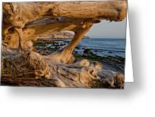 Bowling Ball Beach Framed In Driftwood Greeting Card