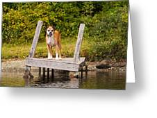 Boxer On Lake Dock Greeting Card by Stephanie McDowell
