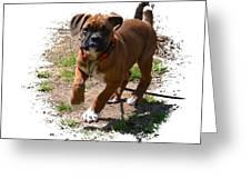 Boxer Puppy 14-1 Greeting Card