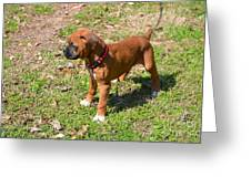 Boxer Puppy 2 Greeting Card by Maria Urso