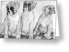 Boxer Puppy Dog Poster Print Greeting Card by Olde Time  Mercantile