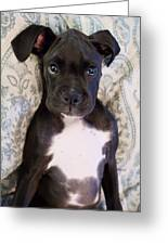 Boxer Puppy Laying In Bed Greeting Card by Stephanie McDowell