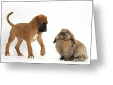 Boxer Puppy With Lionhead-lop Rabbit Greeting Card