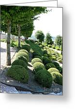 Boxwood Garden Globes Greeting Card