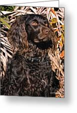 Boykin Spaniel Portrait Greeting Card
