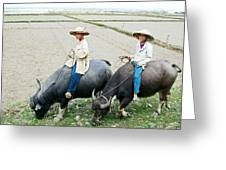 Boys On Water Buffalo In Countryside-vietnam Greeting Card
