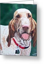 Bracco Italiano  Greeting Card