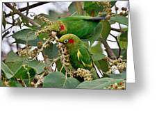 Brace Of Chiriqui Conures Greeting Card
