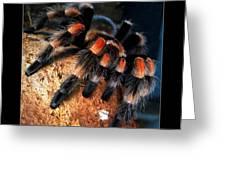 Brachypelma Smithi - Redknee Tarantula Greeting Card