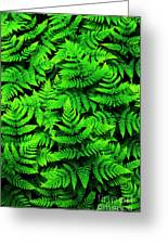 Bracken Ferns Greeting Card