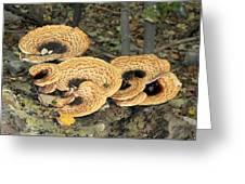 Bracket Fungi Greeting Card