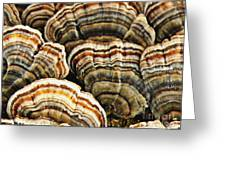 Bracket Fungus 1 Greeting Card