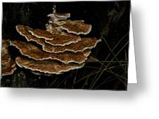Bracket Fungus - Coltricia Greeting Card