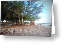 Bradenton Beach  Pine Trees Greeting Card