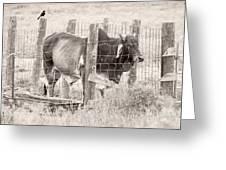 Brahman Bull Greeting Card