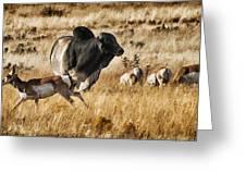 Brahma Bull Meets The Pronghorn Greeting Card