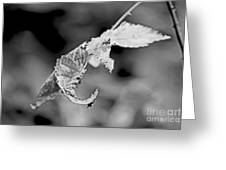Bramble Leaves - Black And White Greeting Card