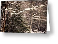 Branch In Forest In Winter Greeting Card