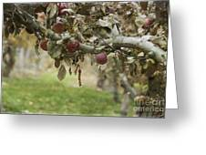 Branch Of An Apple Tree Greeting Card by Juli Scalzi