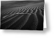 Branch Out In The Desert Greeting Card