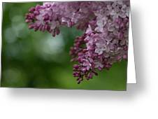Branch With Spring Lilac Flowers Greeting Card