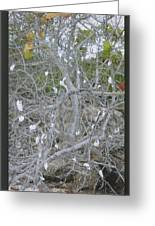 Branches 1 Greeting Card