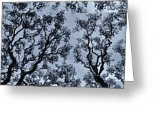 Branches Across Greeting Card