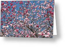 Branches And Blossoms Greeting Card