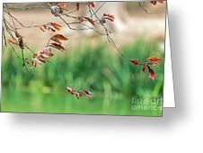 Branches And Leaves Greeting Card