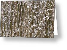 Branches And Twigs Covered In Fresh Snow Greeting Card