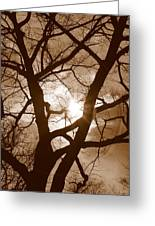 Branches In The Dark 2 Greeting Card