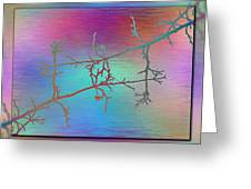 Branches In The Mist 60 Greeting Card