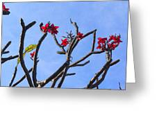 Branches Of Beauty Greeting Card by Denise Darby