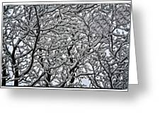 Branches Of Our Life Greeting Card