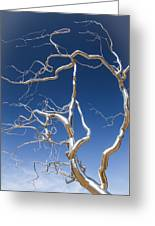 Branches Of Silver Greeting Card by Steven Bateson