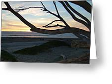 Branches Over The Beach Greeting Card