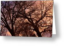 Branching Out At Sunset Greeting Card