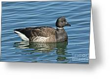 Brant On Calm Water Greeting Card