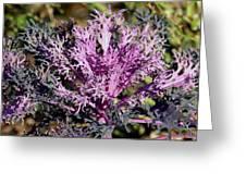 Brassica Greeting Card