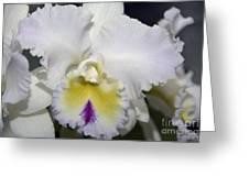 Brassocattleya Orchid 5292 Greeting Card
