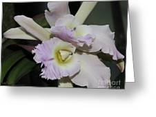 Brassocattleya Princess Teresa 1 Of 2 Greeting Card