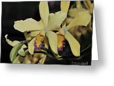 Brassolaeliocattleya Grodsky's Gold Greeting Card