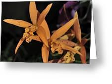 Brassolaeliocattleya Hawaiian Treat Greeting Card