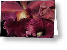 Brassolaeliocattleya Helen Huntington  Chevy Chase Greeting Card
