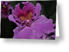 Brassolaeliocattleya Norman's Bay  Hercules Greeting Card