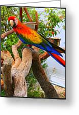 Brazilian Parrot Greeting Card