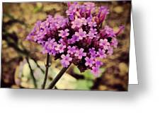 Brazilian Verbena Greeting Card