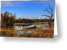 Brazos Bend Swamp Greeting Card