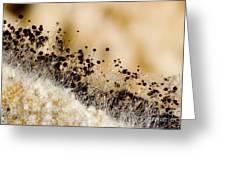 Bread Mold Fungus Rhizopus Nigricans Greeting Card